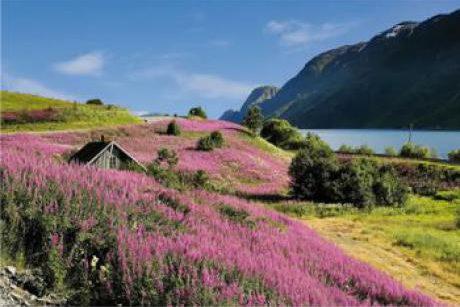 Cruises Fjorden